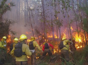 Combate incendios forestales 2