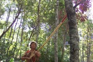 Manejo bosque nativo (poda) pequeños propietarios