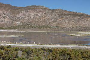 Laguna Arabilla, PN Volcán Isluga.
